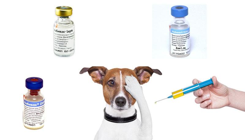 Вакцинация кошек и собак