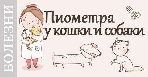Пиометра у собак и кошек