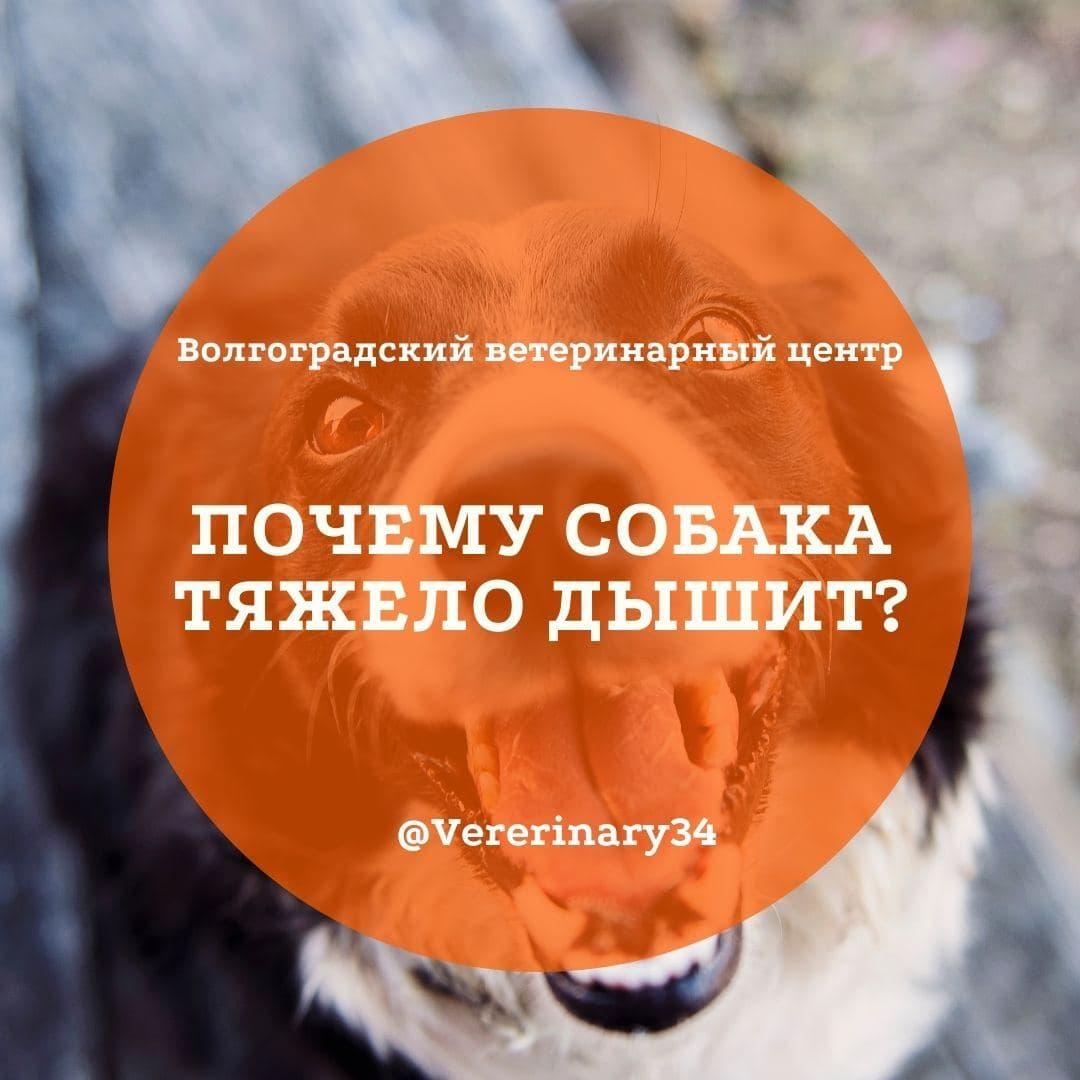 Почему собака дышит тяжело?